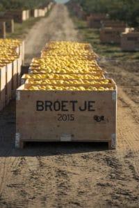 Broetje apples - food photography